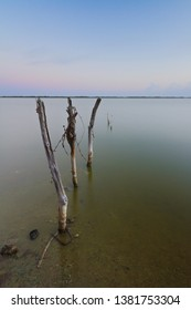 Seascape showing the remains of a wooden fence