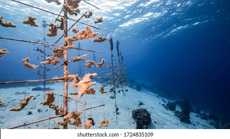 Seascape in turquoise water of coral reef in Caribbean Sea / Curacao with coral nursery of Elkhorn Coral