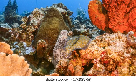 Seascape in turquoise water of coral reef in Caribbean Sea / Curacao with Flounder, coral and sponge