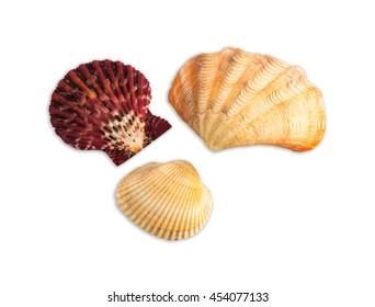 seasheels composition