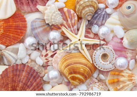 seashell-background-lots-amazing-sea-450