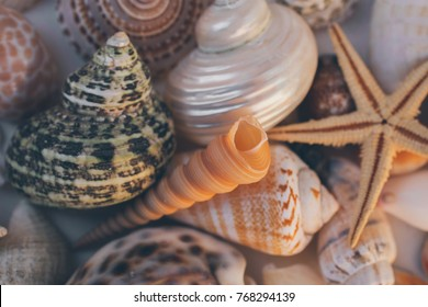 Seashell background. Many different seashells piled together. Macro shot of beautiful seashells texture and background.