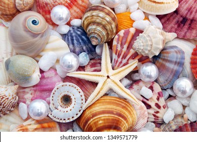 Seashell background with pearls. Many different colorful seashells and starfish and white pearls.