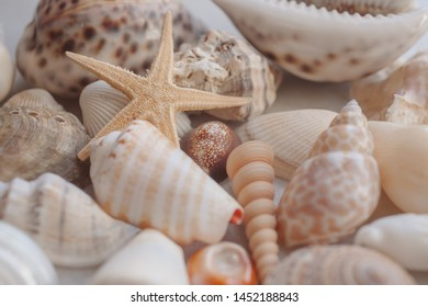 Seashell background with starfish. Many different colorful seashells and starfish piled together.