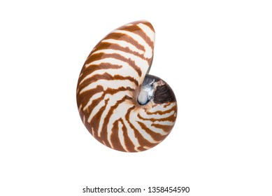 Seashell. Detailed macro shot of Nautilus Pompilius, Chambered Nautilus or Pearly Nautilus shell. Isolated on white background with clipping work path included in jpeg.