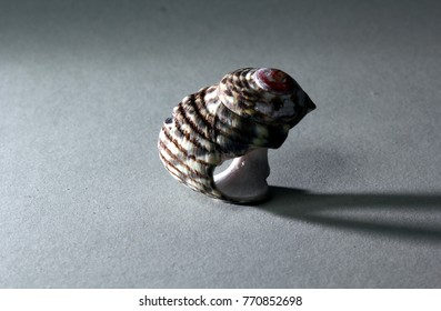 A seashell,  dramatically lit to show contrast, texture, shape and colour against a plain background with copy space.