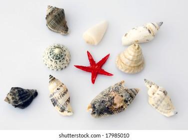 seashell isolated on background