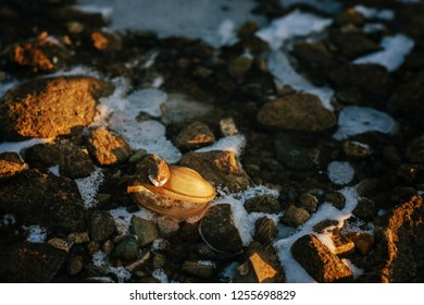 seashell on the beach among the stones in winter