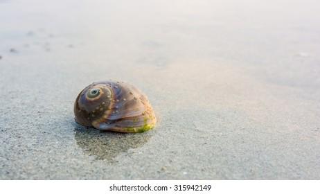 Seashell on the beach. Clam seashell on gray sand.
