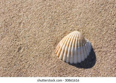 A seashell on beach sand
