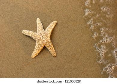 Seashell on the beach at sunrise