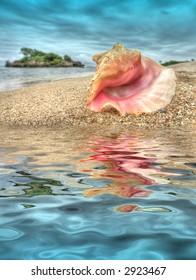 seashell on beach - water reflection s