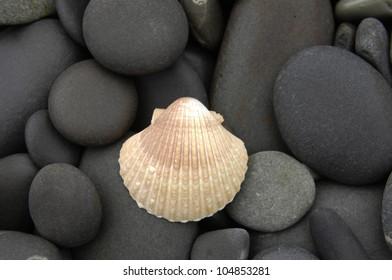 seashell on pebbles shore