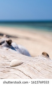 Seashell on a piece of drift wood on a beautiful beach in the Philippines. Holiday, vacation background.