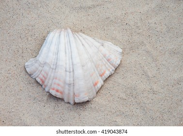 Seashell on sand background