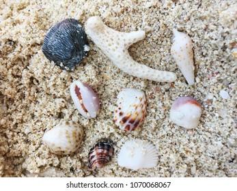 Seashell on the sand beach. Close up, high angle view.