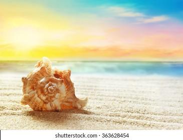 Seashell on the summer beach