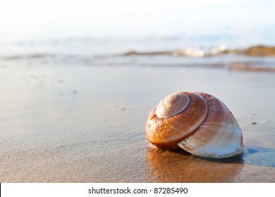 Seashell on the summer beach next to the sea, nature concept