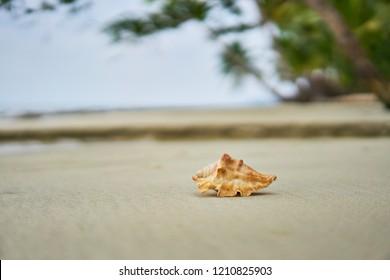 Seashell on the tropical beach