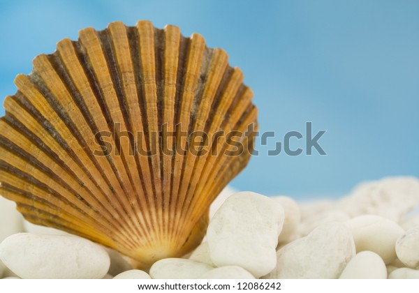 Seashell on white stones with blue sky background