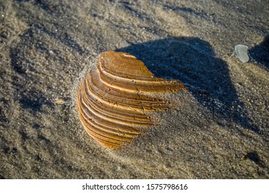 Seashell on a windswept Atlantic Ocean beach in the late afternoon sun. The shell is a hard, protective outer layer created by an animal that lives in the sea.