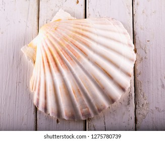 Seashell over white wooden table, horizontal image