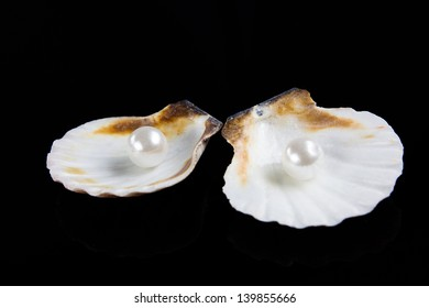 seashell with pearl on black background