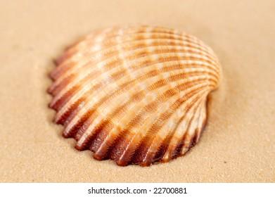 Seashell in sand
