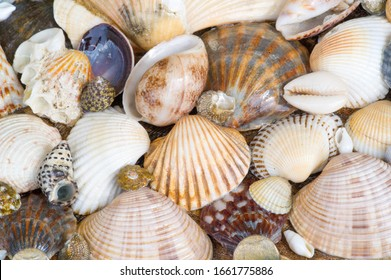 A seashell or sea shell,, also known simply as a shell, is a hard protective outer layer created by an animal living in the sea The shell is part of the animal's body. often found on beaches beaches