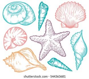 Seashell, sea shell, starfish nature ocean aquatic underwater set. Hand drawn marine engraving colorful illustration on white background