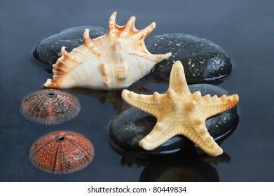 Seashell, starfish and echinus on stone on black water background