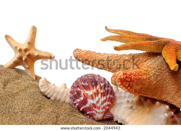 Seashell still life with sand and white background