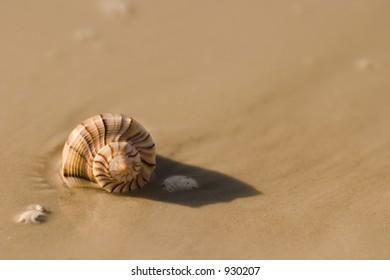 seashell at waters edge