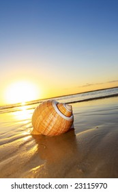 Seashell at the water's edge, with sunset behind.
