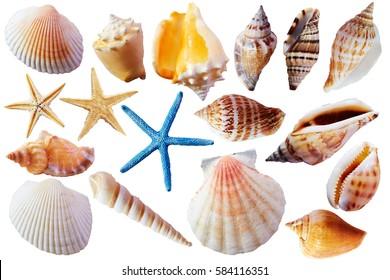image of seashells  Seashells Images, Stock Photos