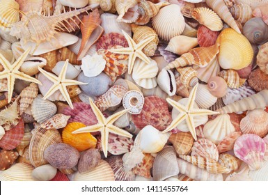 Seashells background, lots of amazing seashells, coral and starfishes mixed