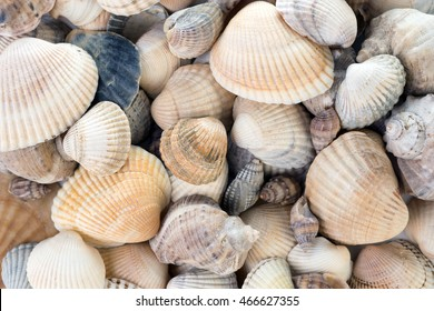 Seashells background. Variety of sea shells from beach