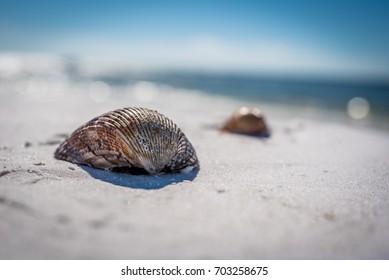 Seashells in the Beach Sand