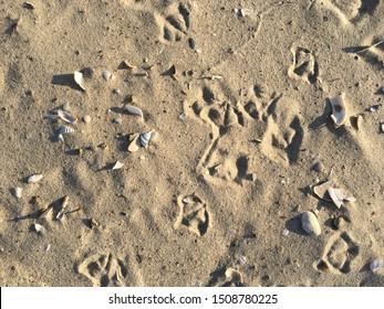 Seashells and bird footprints in the sand