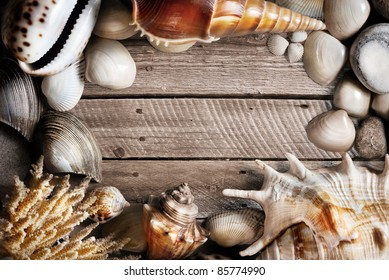 Seashells, coral and stones on wooden textured background with free space for text