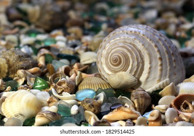 seashells with glass on the beach