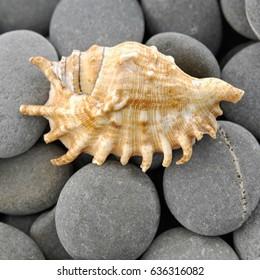 Seashells and gray stones background
