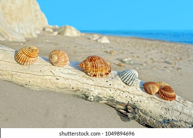 Seashells laid on the rest of the tree on the sea shore. Sicily, Italy