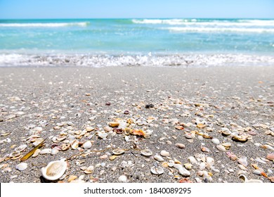 Seashells many sea shells shelling foreground on Sanibel Island, Florida during day on Gulf of Mexico shore and bokeh background of colorful blue water ocean