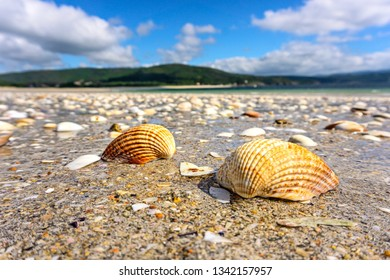 Seashells on the Atlantic beach at low tide. Portugal. Europe.