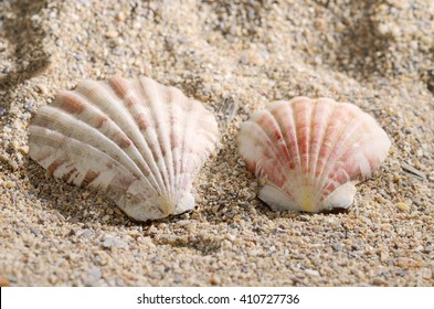 Seashells on beach