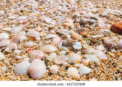 Seashells on the beach of Amami Oshima, Kagoshima Prefecture, Japan