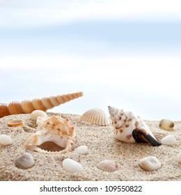 Seashells on a beach as background