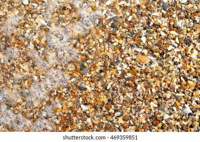 seashells on the beach of black sea