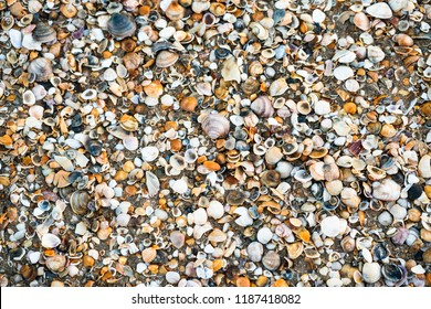 Seashells on beach in Punta Umbria, Spain